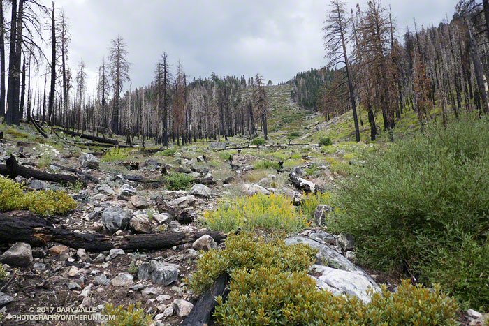 The 2015 Lake Fire consumed most of the downed trees in this avalanche path.
