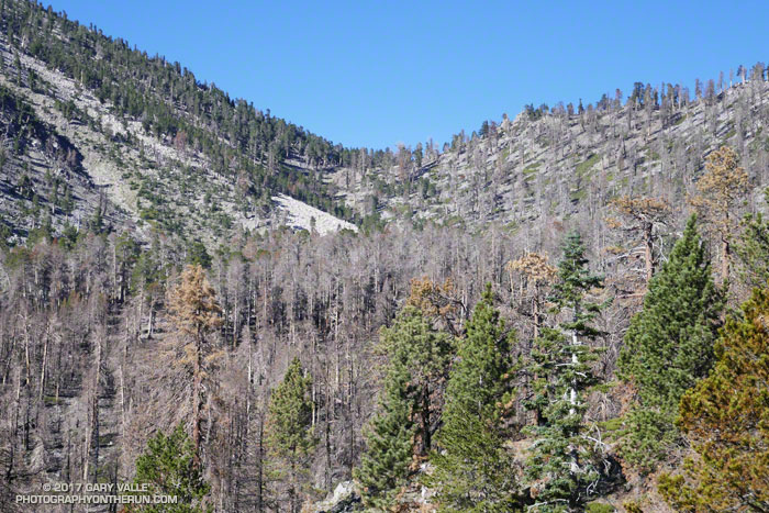 Dollar Lake Saddle from the Dollar Lake Trail about 5 miles from the South Fork Trailhead following the 2015 Lake Fire.