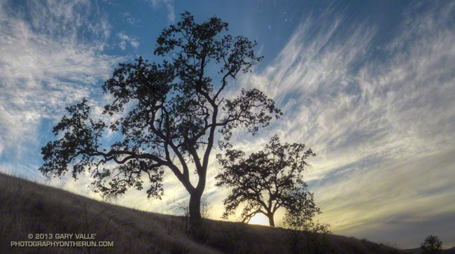 Valley oaks and cirrus clouds near sunset at Ahmanson Ranch