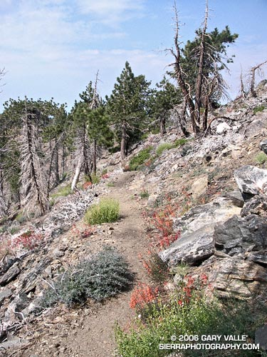 Pacific Crest Trail between of Throop Peak and Mt. Hawkins.