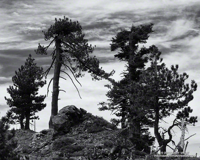 Trees and clouds along the crest of the San Gabriel Mountains. Photography by Gary Valle.