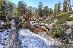 Avalanche debris on the Dry Lake Trail above Dry Lake. July 27, 2019.