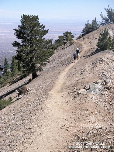 Nearing the summit of Mt. Baden-Powell, in the San Gabriel Mountains.