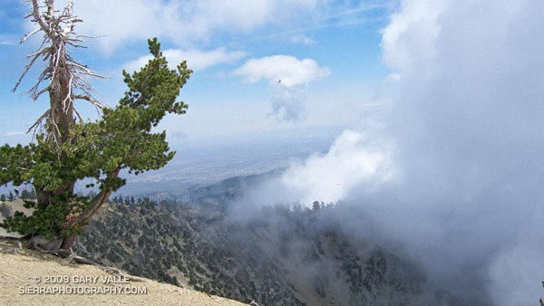 View from near the summit of Mt. Baden-Powell.