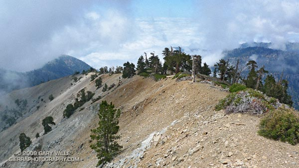 Clouds and pines along south ridge of Mt. Baden-Powell in the San Gabriel Mountains.