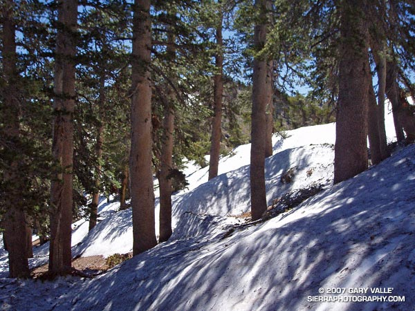 Snow on Mt. Baden-Powell. July 3, 2005.