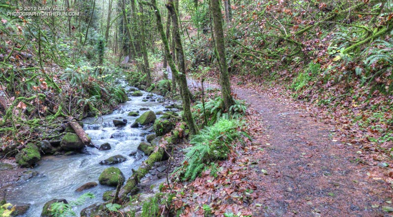 The Wildwood Trail along Balch Creek in Macleay Park -- part of Forest Park, Portland, Oregon.