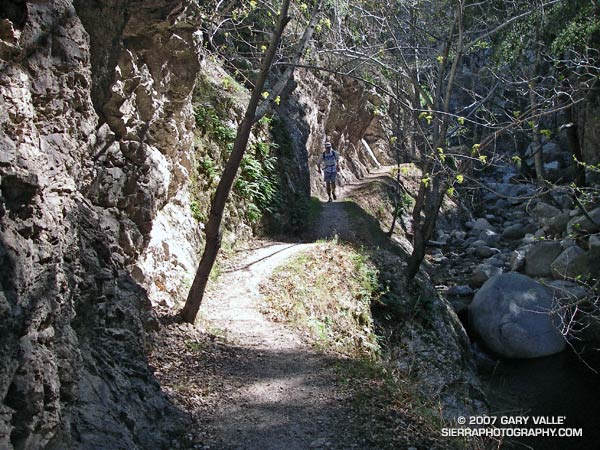 Trail runner in Bear Canyon, in the San Gabriel Mountains.