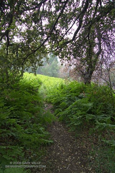 Ferns at Bear Flat