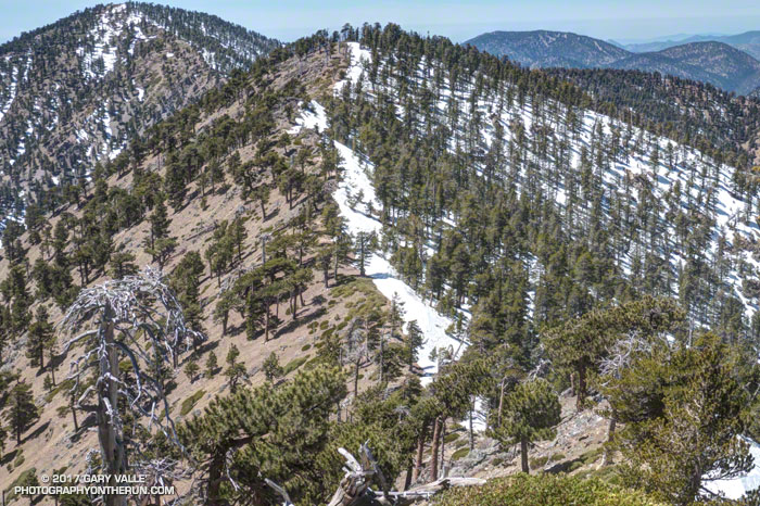 View west along the crest from the shoulder of Mt. Baden-Powell to Mt. Burnham and Throop Peak. April 16, 2017.