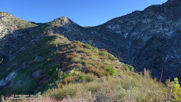 A section of the brushy ridge that appears to have been the route of the old Colby Trail up to the divide on the west side of Strawberry Peak.