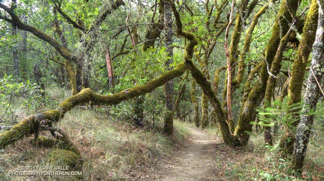 Coyote Peak Trail in Bothe-Napa Valley State Park
