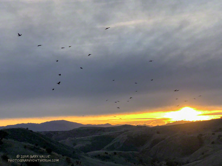 Crows flying west from Lasky Mesa, in the general direction of upper Las Virgenes Canyon. December 24, 2019.