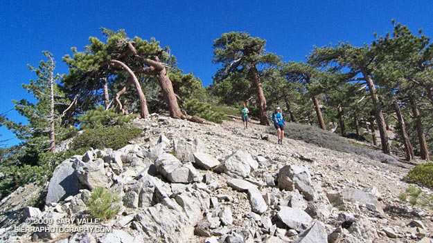 Descending from Pallett Mountain on Pleasant View Ridge, in the San Gabriel Mountains.