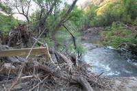 View downstream from bridge across Malibu Creek on Crags Road.