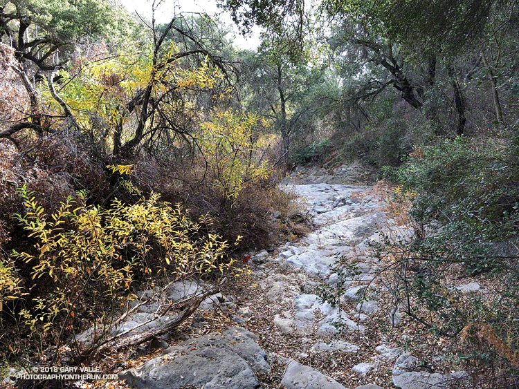 There was no water in Zuma Creek on January 6, 2018. This is at the bridge on the Backbone Trail west of Kanan Dume Road.