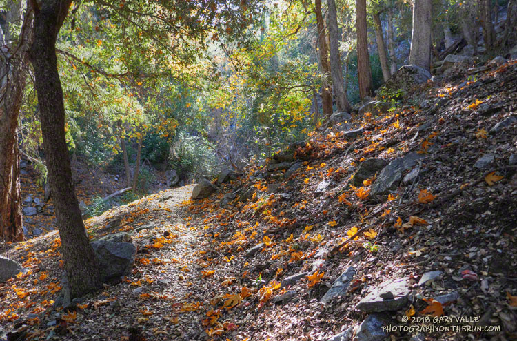 Autumn on the Kenyon Devore Trail in the San Gabriel Mountains near Los Angeles.