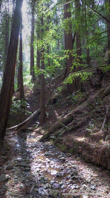Fern Creek, a tributary of Redwood Creek.