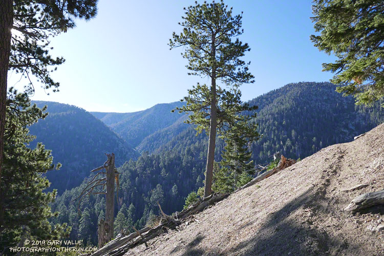 Forsee Creek canyon from the John's Meadow Trail in the San Gorgonio Wilderness.