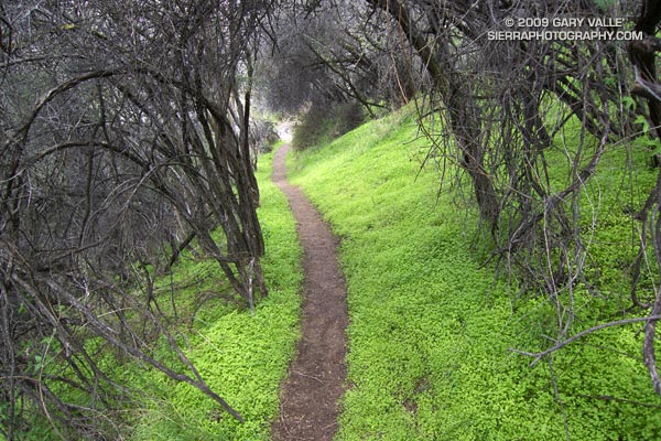 Garapito Trail in Topanga State Park.