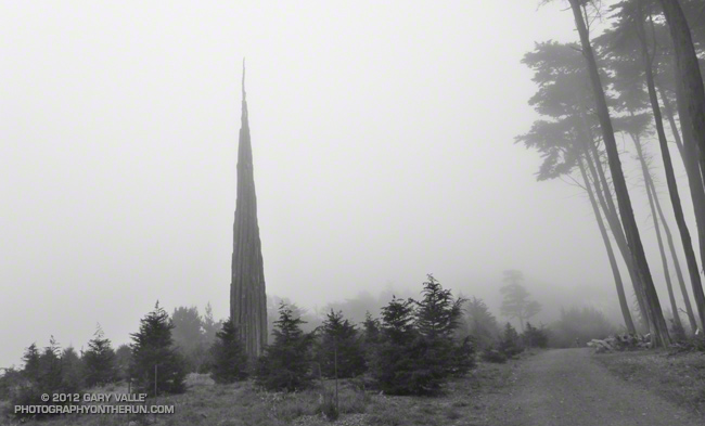 Andy Goldsworthy's Presidio forest sculpture Spire