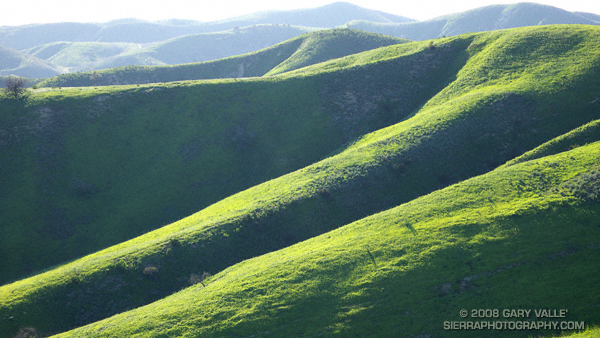 Study of green hills at Ahmanson Ranch following the Winter rains of 2007-2008.