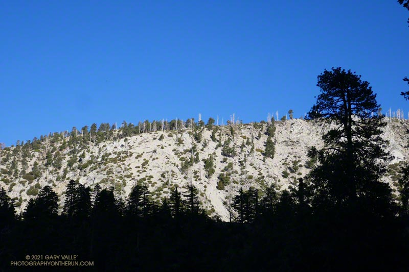 Morning light on Islip Ridge from low on the Windy Gap Trail in Crystal Lake basin in the San Gabriel Mountains.