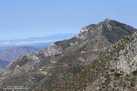 Josephine Peak and fire road from the Gabrielino Trail.