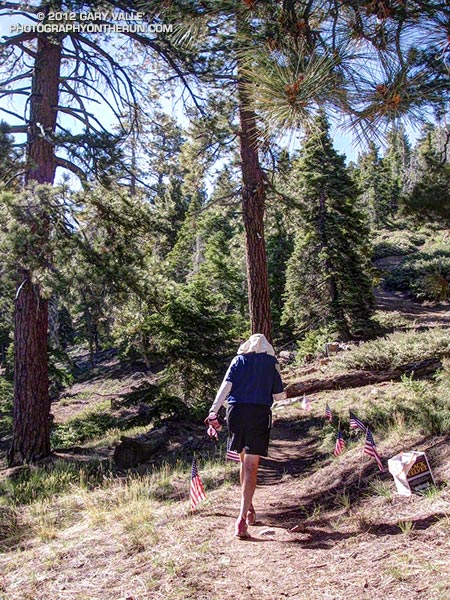 A runner leaving Aid Station #2 follows the flags onto the Pacific Crest Trail at about mile 8.2 of the 15 & 33 mile courses. This forested section of the PCT leads to the high point of the course at 7880 ft., on the slopes of Delamar Mountain.