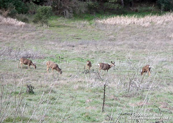 Deer at Malibu Creek State Park.