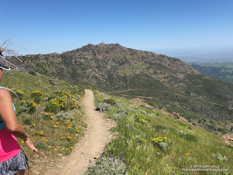 North Peak from the North Peak Trail. Mount Diablo Trails Challenge 50K.