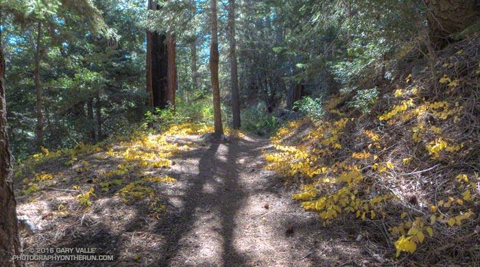 Mine Gulch Trail near Vincent Gap