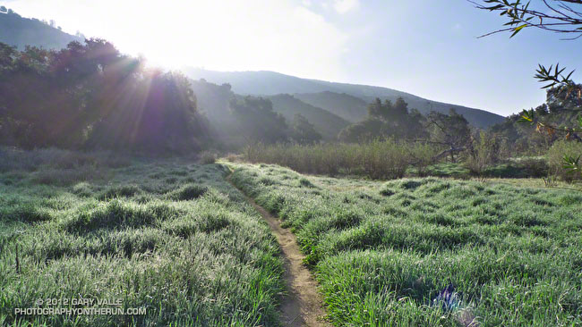 Single track trail and sun in upper Las Virgenes Canyon
