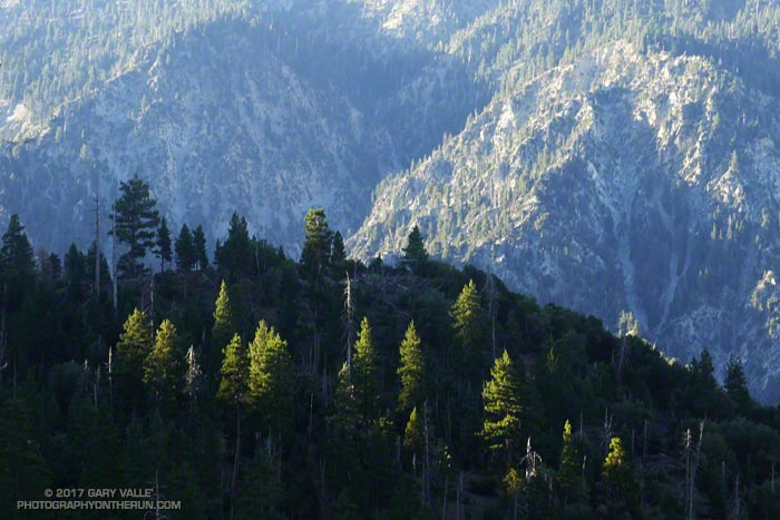 Morning sun on trees above Mill Creek Canyon.