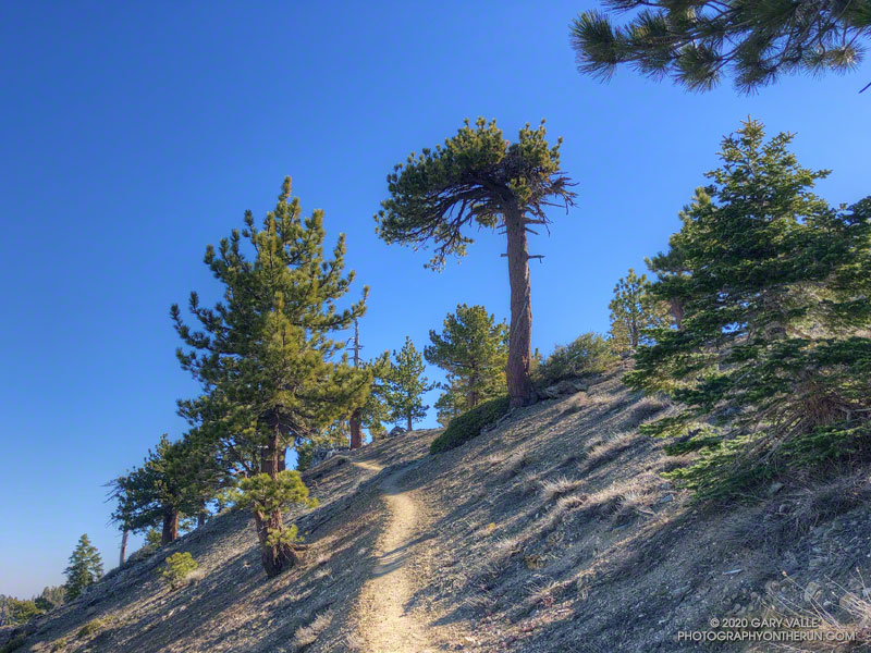 The tree on the right, above the trail, is the Mt. Hawkins lightning tree. The Jeffrey pine was notable because of a spiral lightning scar around its trunk. The photo is from June 8, 2019.