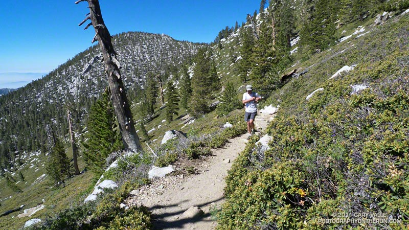 Trail near Miller Peak, at about 10,300' and 3/4 mile below the summit of San Jacinto. Jean Peak is in the background.