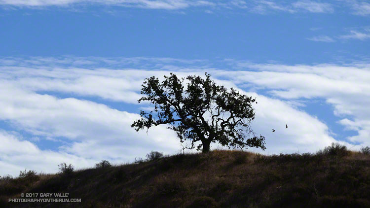 Oak, Hawks and Clouds - Photography by Gary Valle'