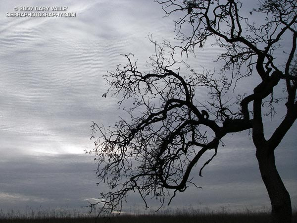 Textured gray skies and a silhouetted oak on Laskey Mesa in Upper Las Virgenes Canyon Open Space Preserve