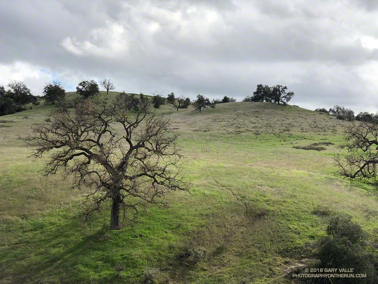 Valley oak, sun and clouds. Photography by Gary Valle'.