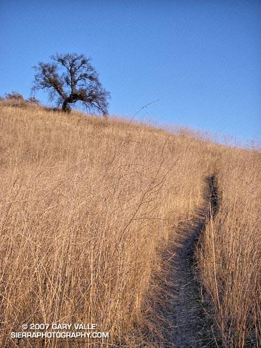 Hillside oak and trail near Laskey Mesa in Upper Las Virgenes Open Space Preserve (formerly Ahmanson Ranch).