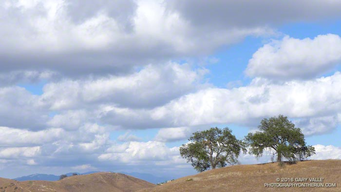 Oaks and clouds Upper Las Virgenes Canyon Open Space Preserve