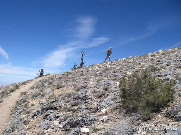 A trail runner nears the summit of Mt.Pinos.
