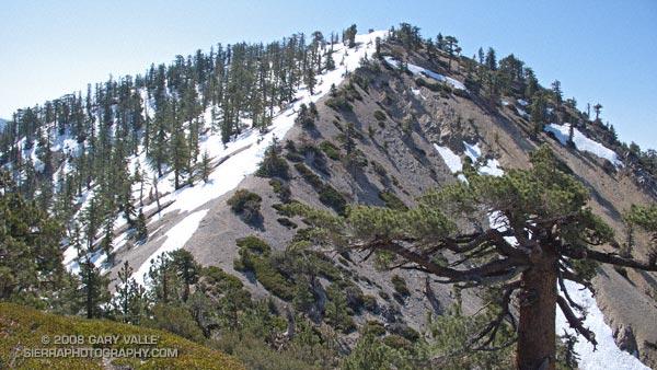 Snow on Pleasant View Ridge, in the San Gabriel Mountains.