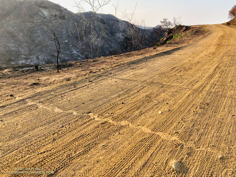 Rattlesnake track on Eagle Springs Fire Road following the May 2021 Palisades Fire