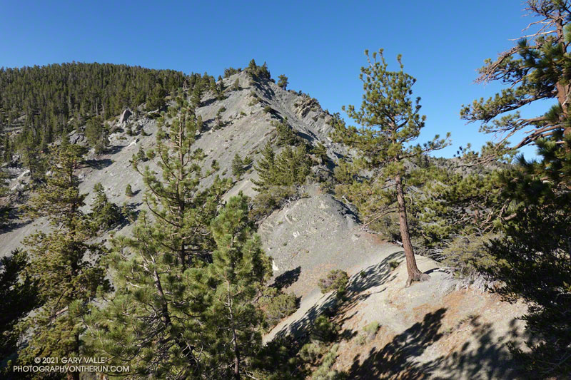 North Backbone Trail below Pine Mountain on Mt. Baldy
