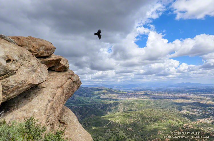 Raven Soaring Near the Summit of Rocky Peak