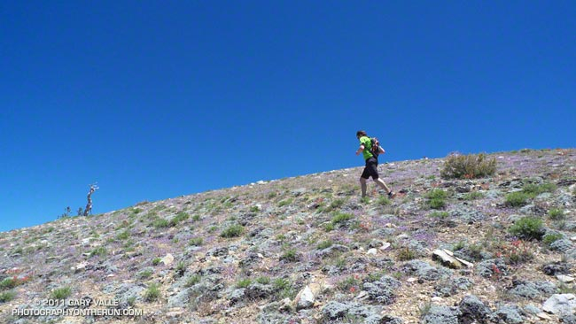 Nearing the summit area of Mt. Pinos
