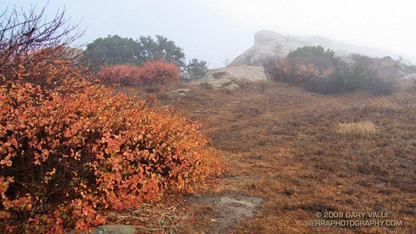 Rain soaked poison oak and clearing clouds.