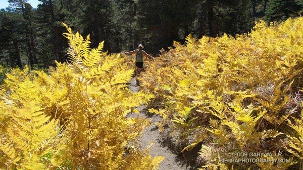Autumn trail running along Wellman Cienega in the San Jacinto Wilderness.