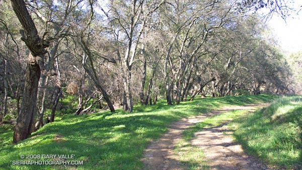 Oaks along the route to Simi Peak.